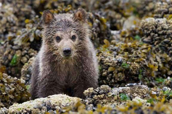 bears1 image