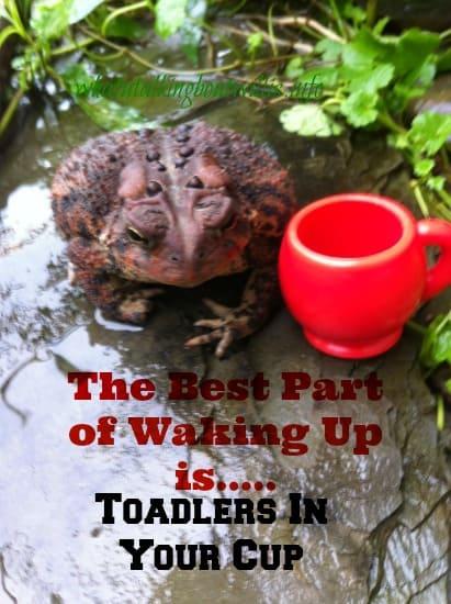 toadlerscup image