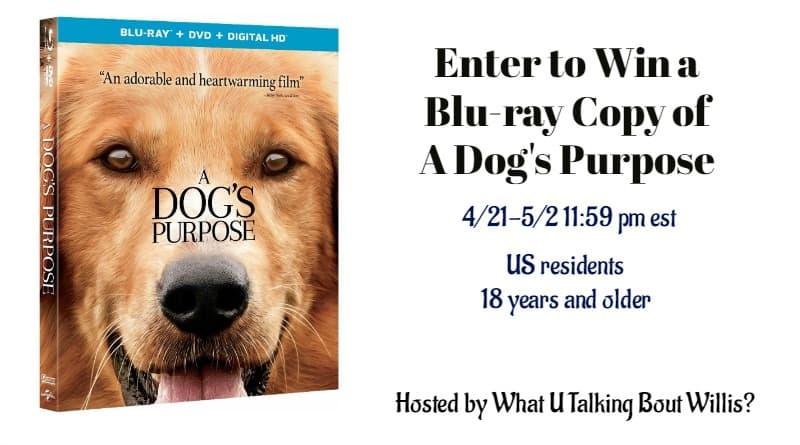 A Dog's Purpose Blu-ray Giveway