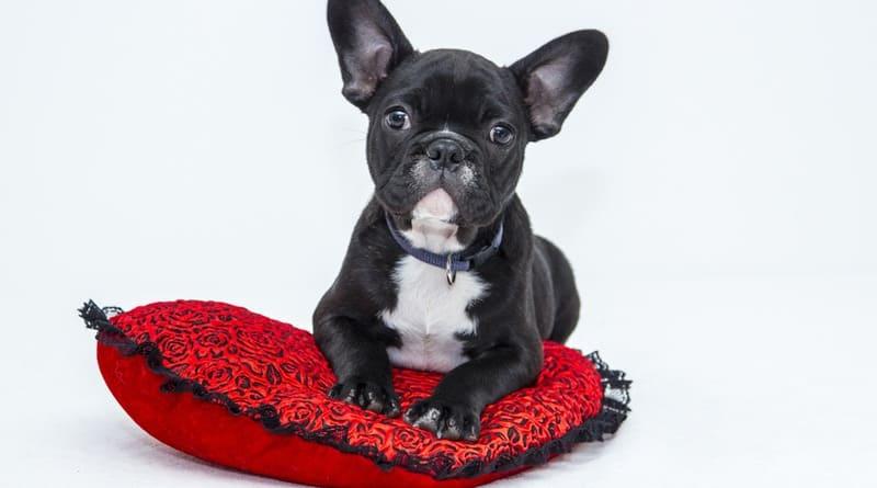 5 Basic Puppy Training Techniques